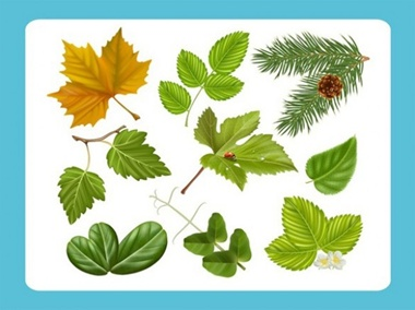 creative,design,download,elements,graphic,green,illustrator,ladybug,leaf,nature,new,original,set,tree,vector,web,flowers,detailed,interface,branch,floral,unique,vectors,autumn,leaves,quality,stylish,maple,fresh,high quality,ui elements,hires,realistic,maple leaf vector