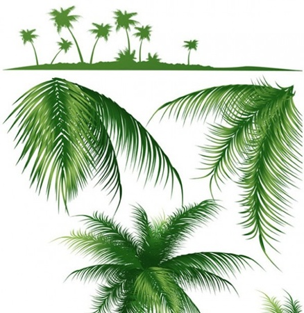 creative,design,download,elements,eps,graphic,illustrator,new,original,tree,vector,web,detailed,interface,unique,vectors,palms,palm tree,quality,stylish,fresh,high quality,ui elements,hires,branches,palm branches,palm silhouette,tropical silhouette vector