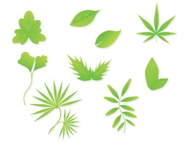 clean,clear,creative,download,eps,graphic,green,illustration,illustrator,leaf,new,original,pack,photoshop,vector,simple,detailed,modern,unique,vectors,ultimate,ultra,leaves,quality,eco,fresh,high quality,vector graphic vector