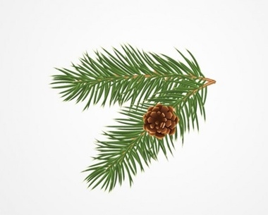 creative,design,download,elements,graphic,illustrator,new,original,vector,web,christmas,detailed,interface,branch,unique,vectors,evergreen,quality,stylish,pine,fresh,high quality,ui elements,hires,realistic,bough,pine cone,pine tree vector