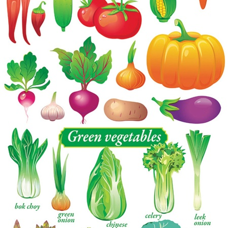 creative,design,download,elements,eps,graphic,illustrator,new,original,set,tomato,vector,web,detailed,interface,unique,vectors,chili,peppers,quality,stylish,potato,vegetables,fresh,eggplant,cabbage,high quality,ui elements,hires,corn on  cob,veggies,artichoke,asparagus,lettuce,radish vector