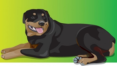 animal,creative,download,illustration,illustrator,original,pack,photoshop,vector,dog,modern,unique,vectors,quality,fresh,high quality,vector graphic,breed,rottie,rottweiler vector