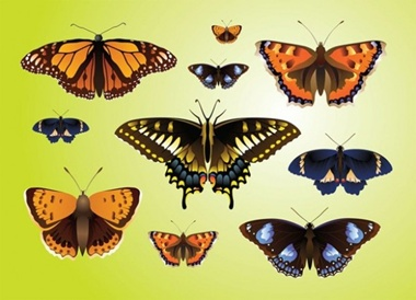 art,creative,design,download,graphic,illustrator,original,vector,web,insect,butterfly,unique,vectors,summer,beautiful,quality,butterflies,stylish,fresh,high quality,realistic,mariposa vector