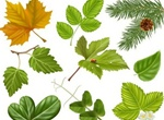 Seasonal Nature Leaves Vector Graphics Set