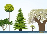 Natural Trees Vector Collection