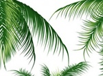 Tropical Palm Tree Silhouette & Branches