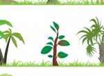 9 Jungle Trees & Grasses Vector Set