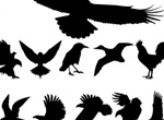 Set Of Birds Silhouettes Vector