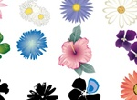12 Summer Flower Petals Set