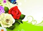 Spring Rose 1