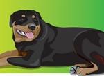 Detailed Rottweiler Dog Vector Illustration