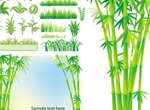 Fresh Green Grasses & Bamboo Vectors