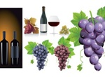 From Grapes To Wine Vector Graphics