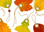 Vector Beautiful Maple Leaves Pack