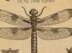 Vintage Dragonfly Brushes
