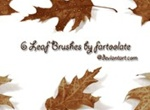 6 Leaf Brushes