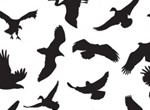 41 Flying Birds Silhouettes Vector Graphics