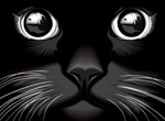 Black Shiny Cat Eyes Vector Illustration
