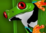Glossy Green Frog In The Grass Vector Graphic