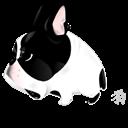 Dog, Zodiac Icon