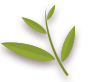 Leaf, Pinnately Icon