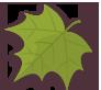 Leaf, Palmately Icon