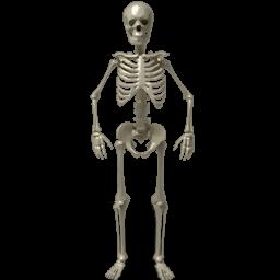 Skeleton, Standing Icon
