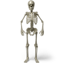 Skeleton, Standing Icon