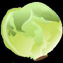 Cabbage, Icon Icon