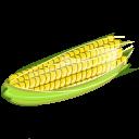Corn, Icon Icon