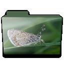 Butterfly, Folder Icon