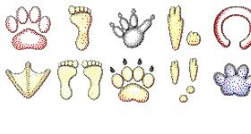Animal Tracks Icons