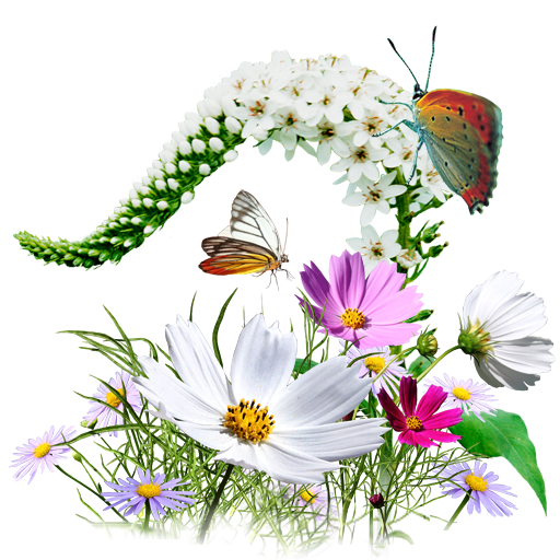 Flowers, Wildflowers Icon