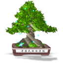 Bonsai, Final Icon