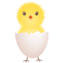 Chicken, Egg, Shell Icon