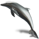 Animal, Dolphin Icon