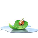 Animal, Insect, Ladybird, Leaf, Pool, Water Icon