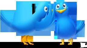 Animals, Bird, Birds, Chat, Talk, Twitter Icon