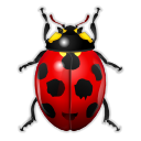 Bug, Insect, Ladybird Icon