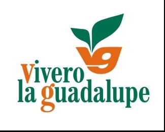 green,leaf,mexico,kenneth,guadalupe logo