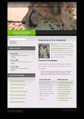 animals,lion,wild website template