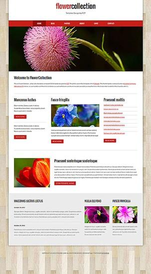 blog,personal,portfolio website template
